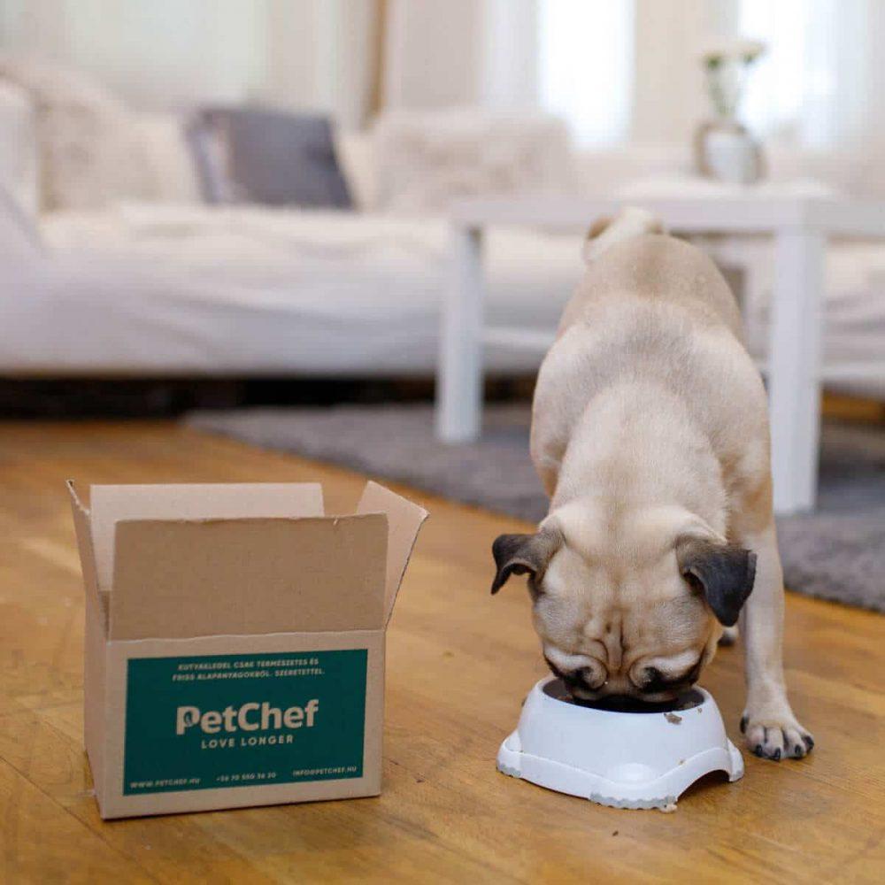 Petchef Feeling 3