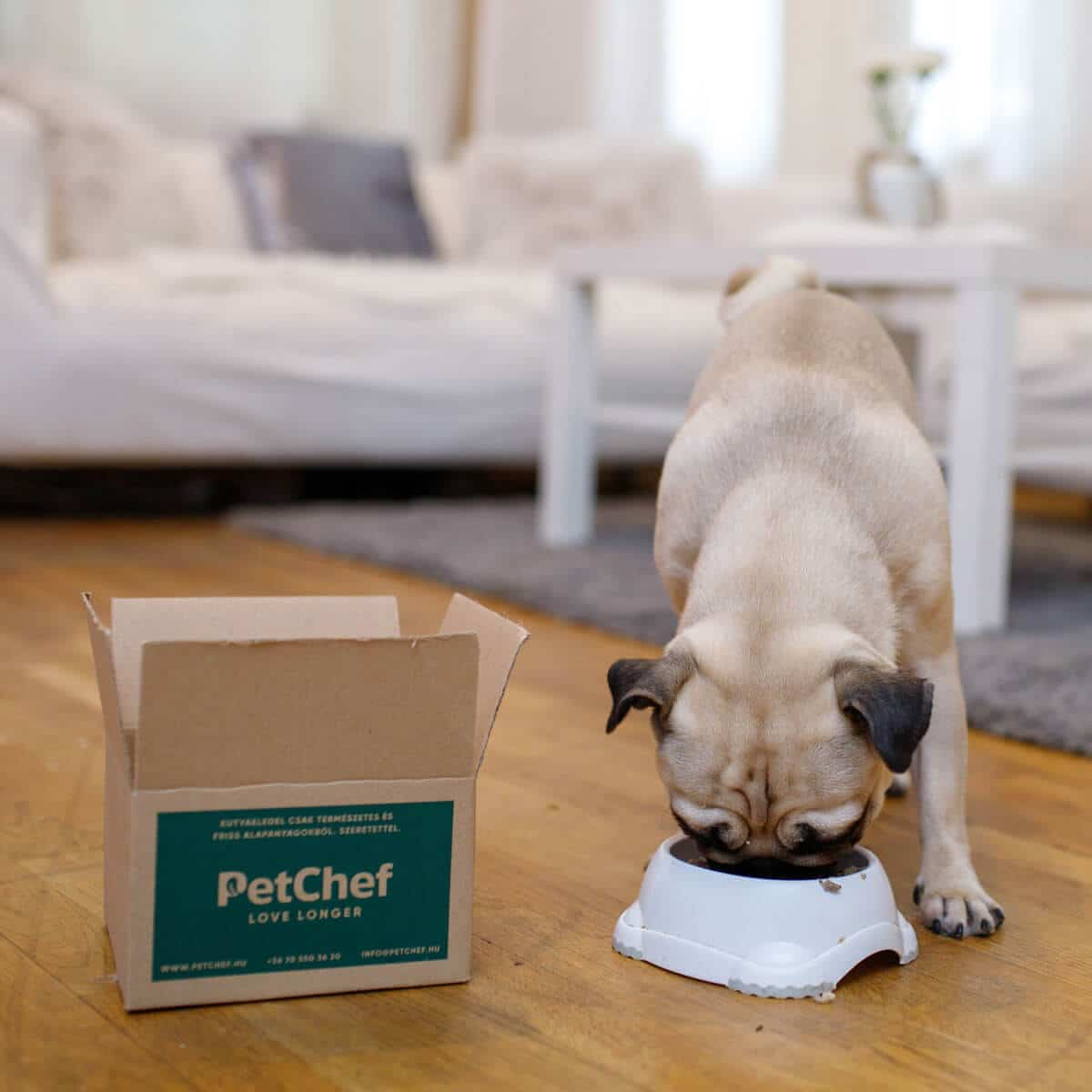 Petchef Feeling 3