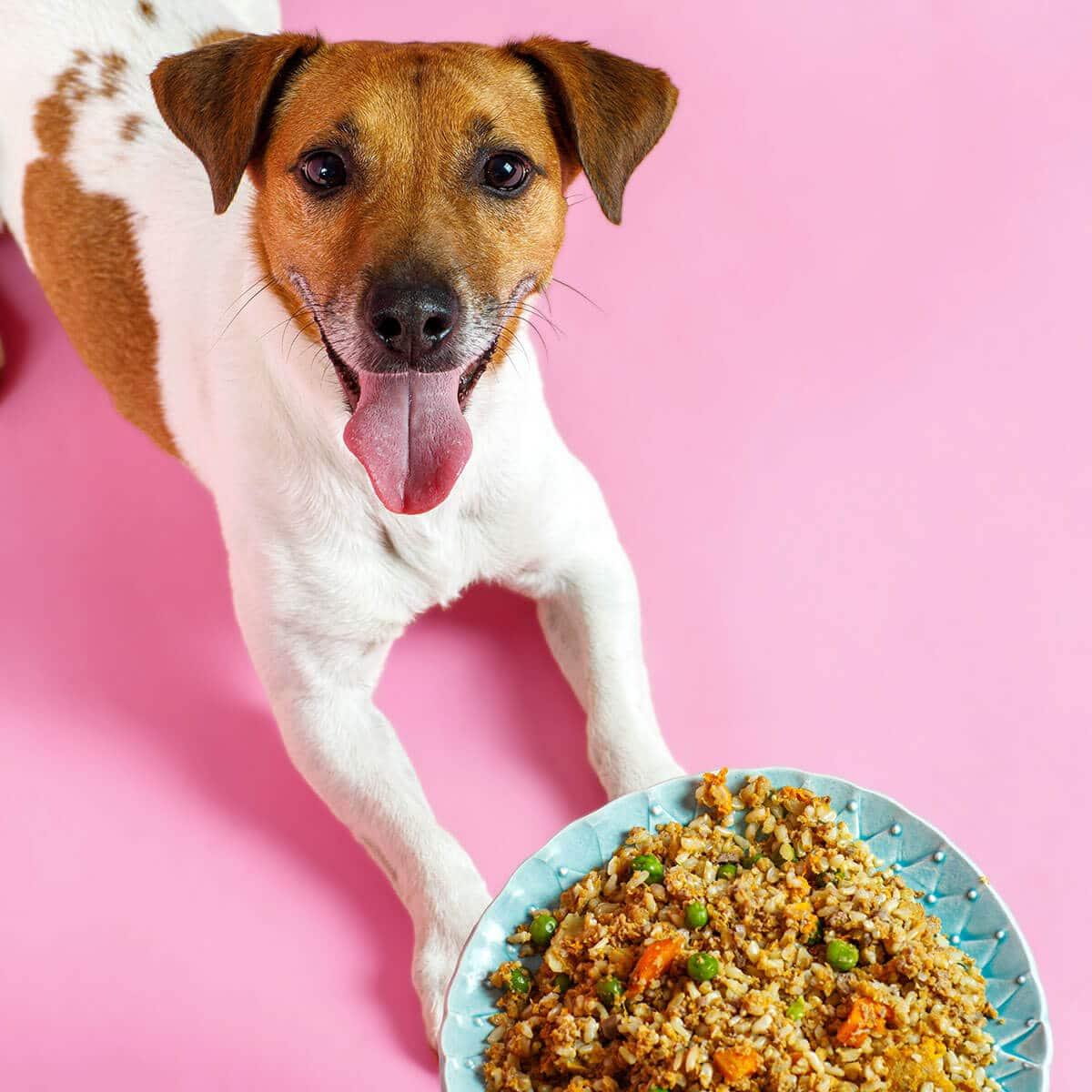A májbeteg kutya táplálásához jó kutya diéta receptek kellenek.