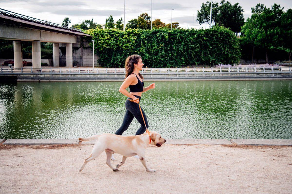 Petchef A Kutyasok Bizonyitottan Egeszsegesebbek A Kutyatlanoknal 2