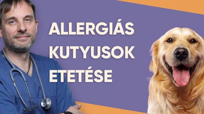 Petchef Allergias Kutyusok Etetese Dr Varga Jozsef