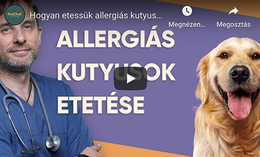 Allergias Kutyusok Etetese Petchef