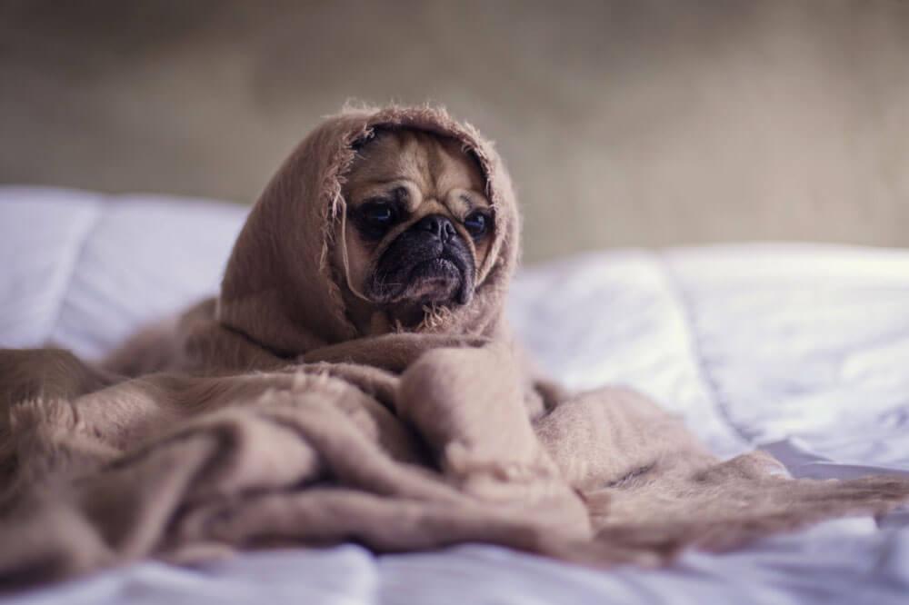 A kutya veseelégtelenség: okok, tünetek és kezelés