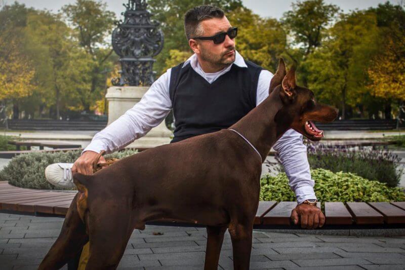 Petchef Nyakas Gabor Kutyaeledel
