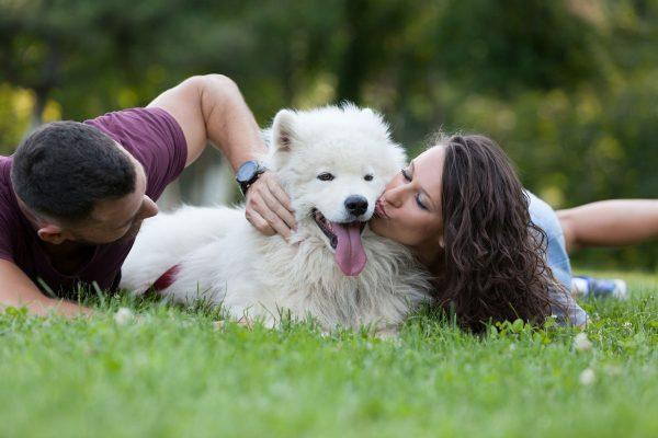 A kutya szürkehályog is oka lehet, ha a kutya szeme könnyezik