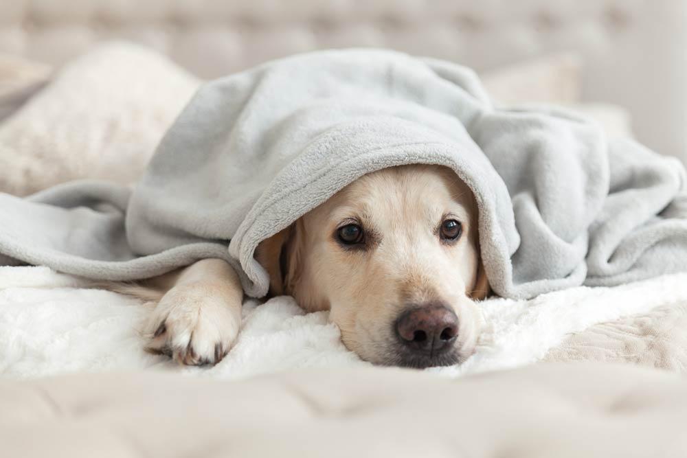 kutya betegségek járhatnak hányással, de az egyéb tünetek is árulkodóak