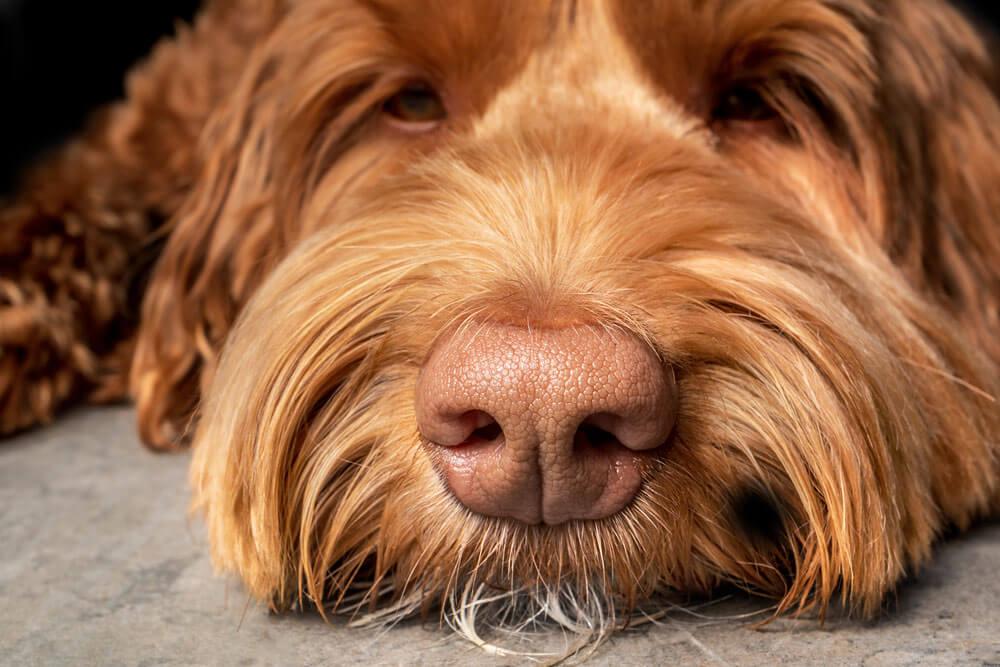 A kutya gyomorsav túltermelődése ritka, inkább a kevés a jellemző
