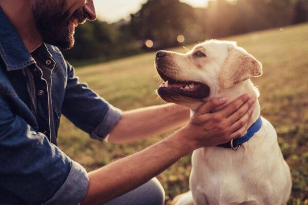 A babézia kutyáknál súlyos is lehet.