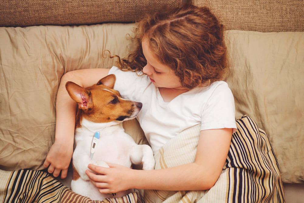 Mikor lázas a kutya? Amikor a kutya testhőmérséklete magasabb, mint 39,7 fok.