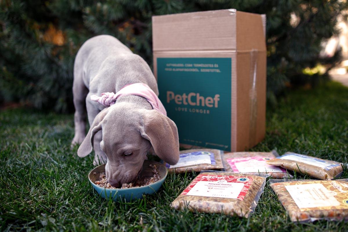 A kiskutya etetése során megfelelő mennyiségű és jó minőségű kutyaeledellel tápláljuk kedvencünket.
