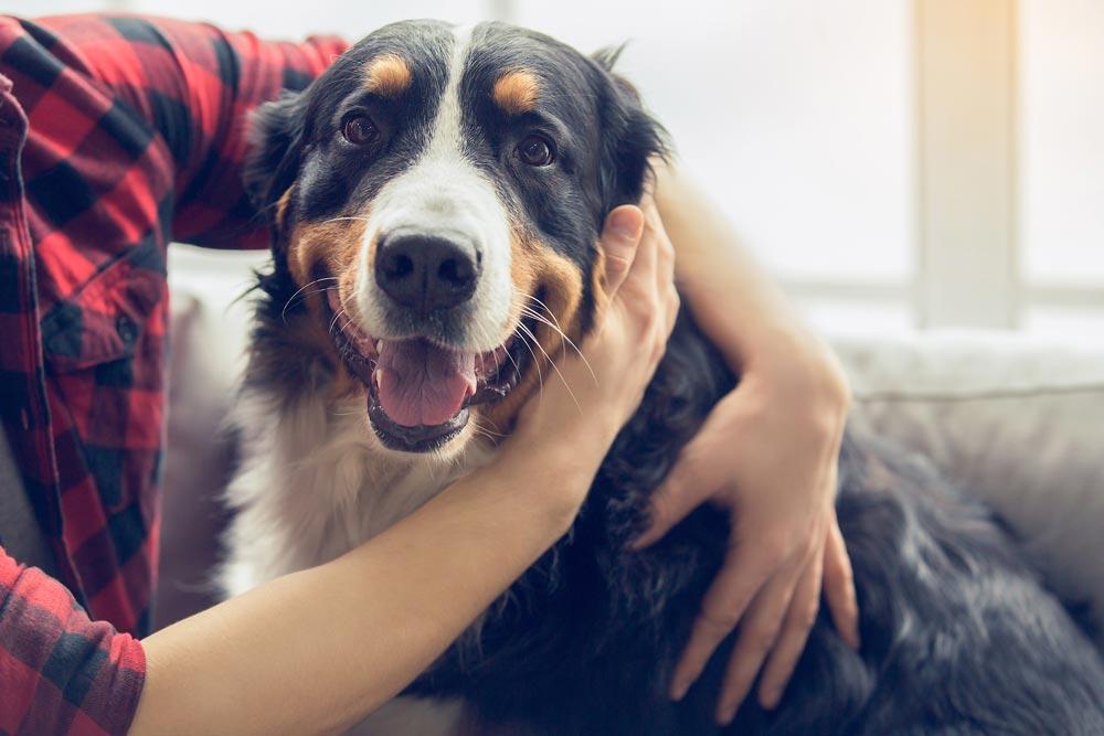 A kutya izületi gyulladás kezelése házilag csak állatorvos felügyeletével javasolt.